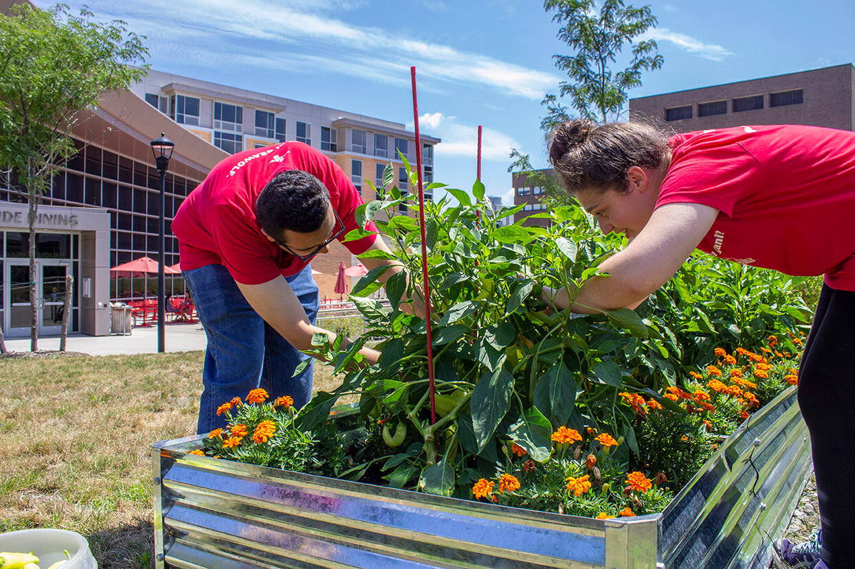 Sustainability Studies Students Use Environmental Knowledge to Build Gardens with FSACampus Permaculture Gardens provide educational opportunities for students, sustainable food sources, and enhance the beauty of the Stony Brook campus