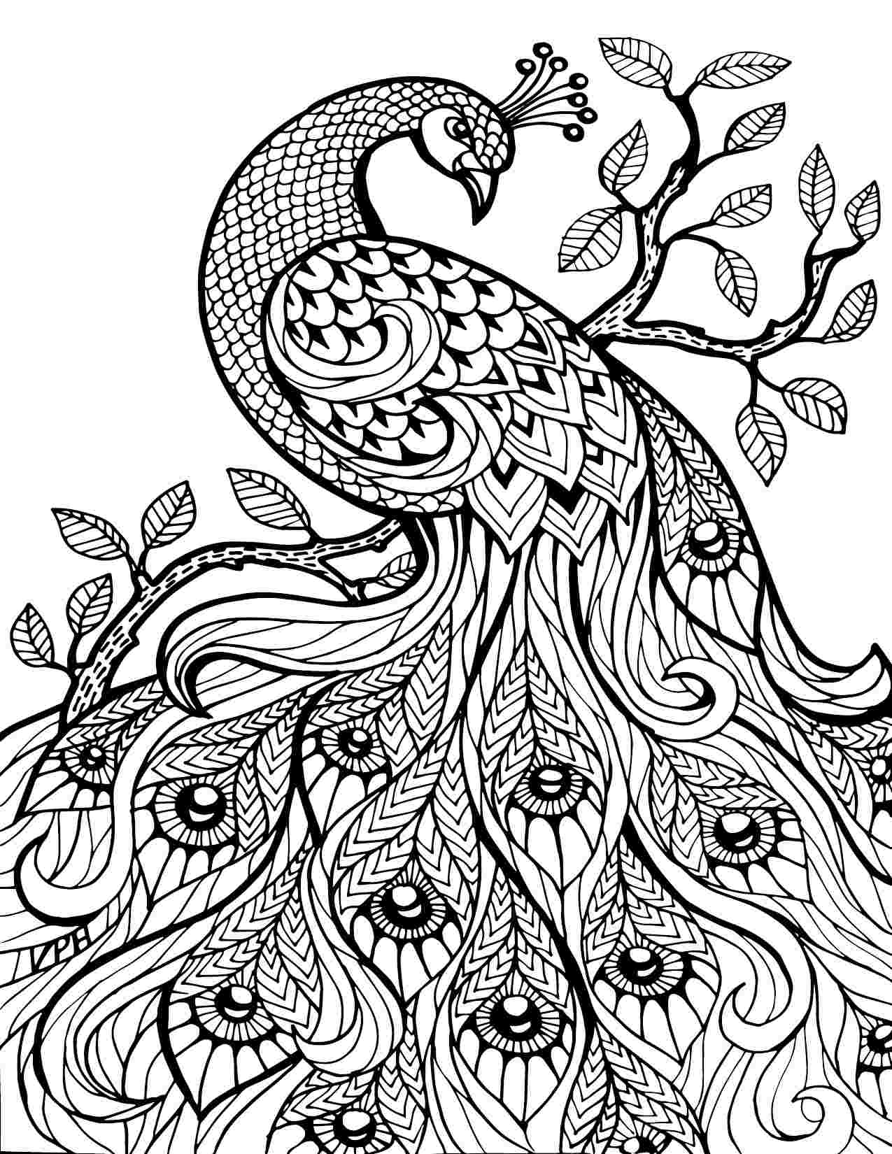Coloring Sheet- Peacock