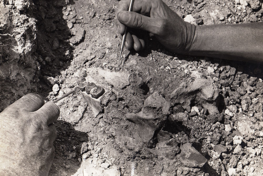 OH 7, the type specimen for Homo habilis discovered by Louis and Mary Leakey, beingexcavated in 1960.