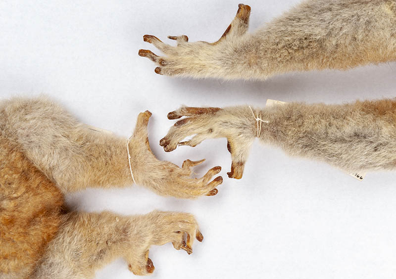 Grooming Claws