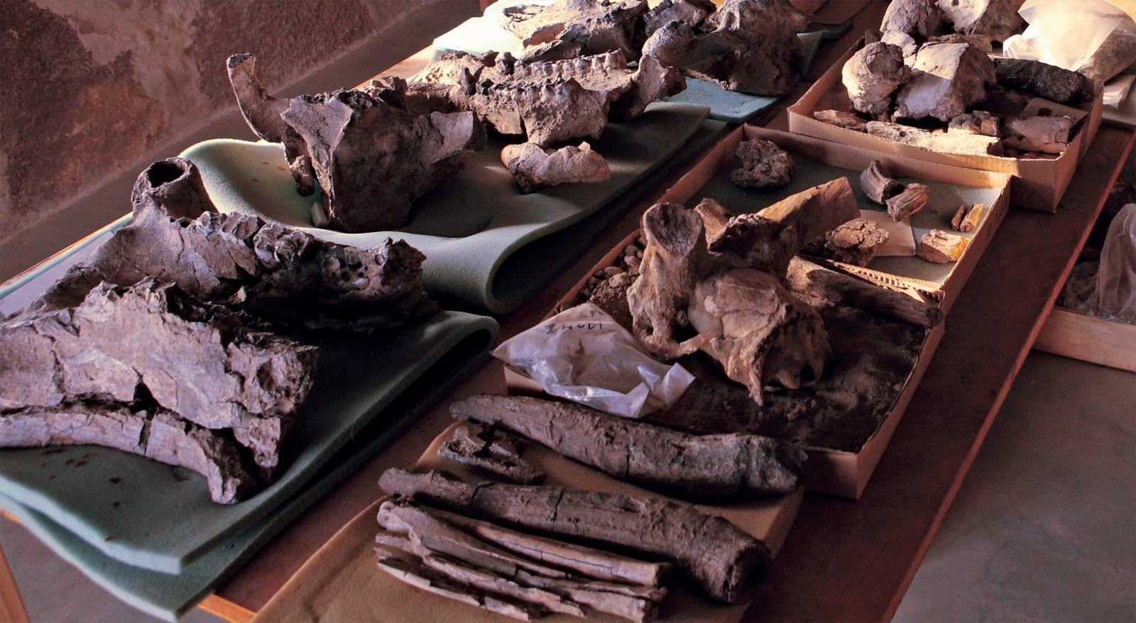 Recovered fossils await preparation and cataloging at the Turkana Basin Institute in Ileret.  Photo by Mike Hettwer