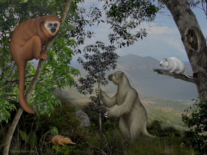 "Caribbean Animals: Caribbean Islands Reveal A ""Lost World"" Of Ancient Mammals"