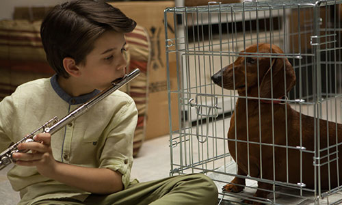 killer films wiener-dog